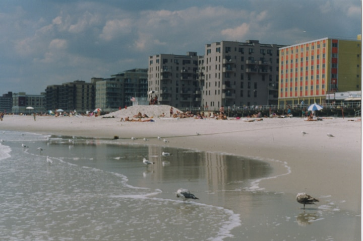 long-beach-panorama-picture